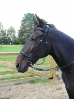 LightRider Euro Raised Bridle at Equigear