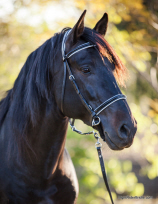 Lightrider Dressage Bitless Bridle at Equigear